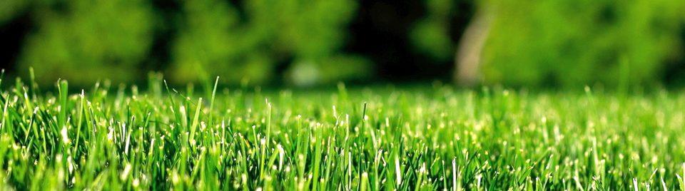 О вашем газоне мы позаботимся так, что он всегда будет выглядеть идеальным!