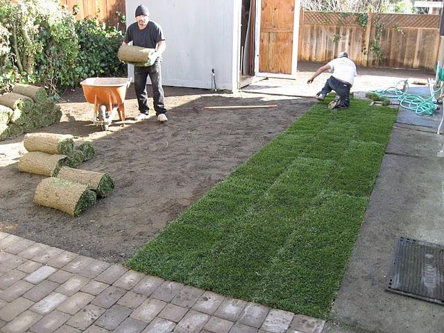 Lawn_sodding_1