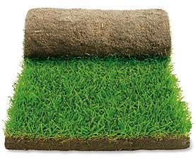 roll_lawn