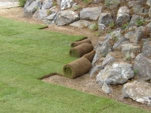 zakladanie travnikov